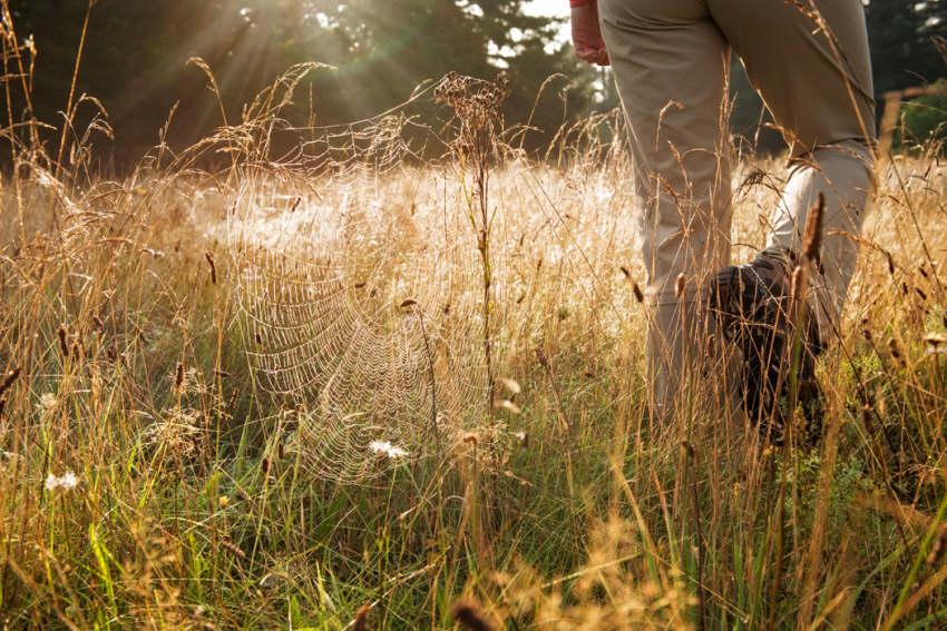 Wanderurlaub in der Urlaubsregion Teutoburger Wald